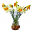 Flower narciss in vase — Stock Photo