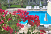 Flowers against background pool — Stock Photo