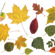 Collection of leafs - Stock Photo