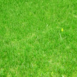 Lawn, grass — Stock Photo