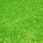 Lawn, grass — Stock Photo