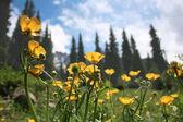 Flowers against blue sky — Stock Photo