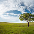 Tree against the blue sky - Stock Photo