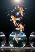 Saltos de goldfishs — Foto Stock
