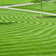 A huge green lawn — Stock Photo