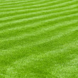 Stock Photo: Huge green lawn