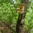 Wooden birds house on a tree — Stock Photo