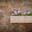 Stock Photo: Petuniflowers on stone wall