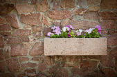 Petunia flowers on a stone wall — Stock Photo