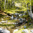Wild creek amongst stone - Photo