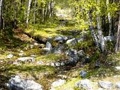Wild creek amongst stone — Stock Photo
