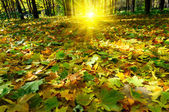 Autumn in the forest. — Stock Photo