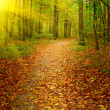 Sunbeams covered lane in the forest. — Stock Photo