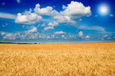 Amazing yellow field of wheat. — Stock Photo