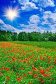 由夏天的美丽、 神奇景观. — 图库照片