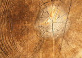 The old brown cracked stump. — Stock Photo