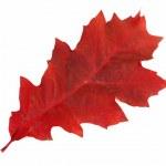 Autumnal leaf on a white. — Stock Photo #6289003