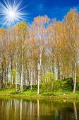 Spring grove vedle pěkný rybník. — Stock fotografie