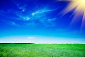 Splendid green field and the blue sky with clouds. — Stock Photo