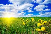 Mañana de primavera sobre campo verde. — Foto de Stock