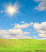 Splendid green field and fun sun. — Stock Photo