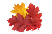 Autumnal leaves on a white. — Stock Photo