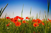 Beautiful meadow by summer. — Stock Photo