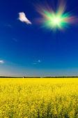 Wonderful house among golden rapeseed field and fun sun. — Stock Photo