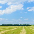 Panoramic view of cereal field and sunflowers. — Stock Photo