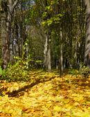 Wonderful autumnal grove — Stock Photo
