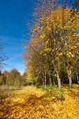 Wonderful autumn grove. — Stock Photo