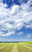 Mown field of wheat and amazing sunflowers under white clouds. — Stock Photo