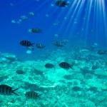 Astonishing undersea world of Red Sea. — Stock Photo #6369923