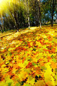 Autumn in the golden forest. — Stock Photo