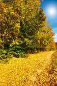 Amazing autumn forest. — Stock Photo