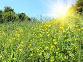 草原の上の夏の朝. — ストック写真