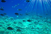 Astonishing undersea world of Red Sea. — Stock Photo