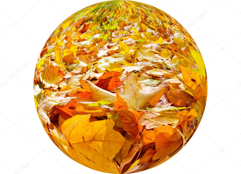 Autumn leaves covered the ground golden carpet. — Stock Photo #6368881