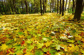 Autumn. came in the grove. — Stock Photo