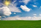 Wspaniałe zielone pole wiosną. — Zdjęcie stockowe