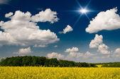Finest rapefield and cloudscape. — Stock Photo