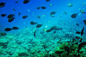 Underwater landscape of Red sea. — Stock Photo