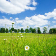 Camomiles and wide steppe. - Stock Photo