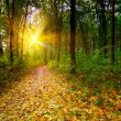 Golden sunbeams in the grove by autumn. — Stock Photo
