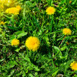 Fun dandelions and sunset on the meadow. — ストック写真