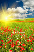 Wonderful sunset above green meadow. — Stock Photo