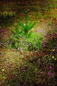 Прекрасный газон, цветы и маленькие сосны. — Стоковое фото