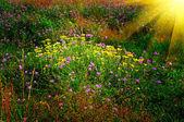Zachód słońca nad trawnika latem. — Zdjęcie stockowe