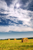 Field with bales against tender sun in the blue sky. — Stock Photo