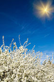 Flor de arbusto bonito, colorido. — Foto Stock